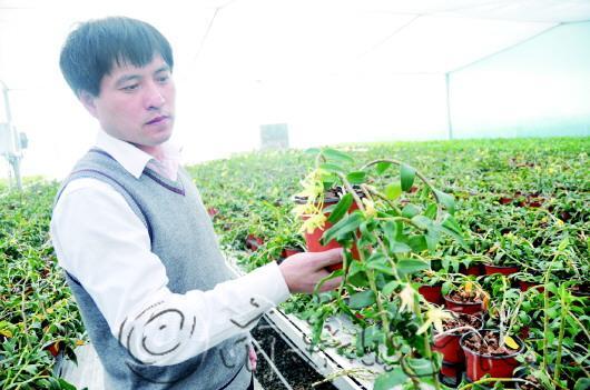 孟庆民向记者介绍铁皮石斛。