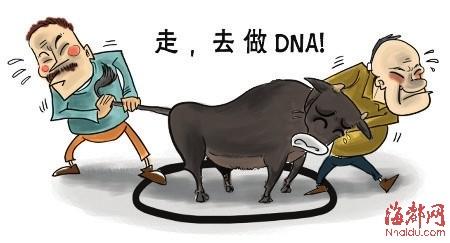 漫画主人两家争DNAv漫画辨小牛(图)朴灿烈韩风一头图片