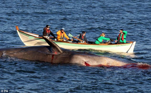 一头遭撞击死亡的鲸鱼搁浅在英国海滩,血流不止染红海水。