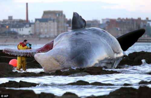 英国动物保护机构的人员正在对鲸鱼进行拍照。
