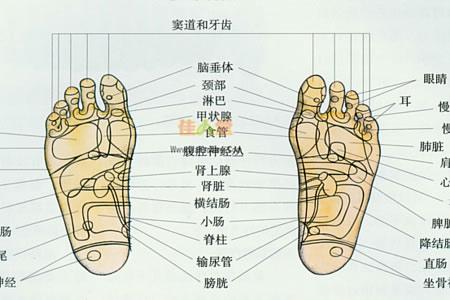 该理论声称脚底的某个部位对应人体的某个器官,进行一定手法操作可以
