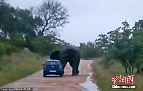 大象靠近这对情侣的汽车。