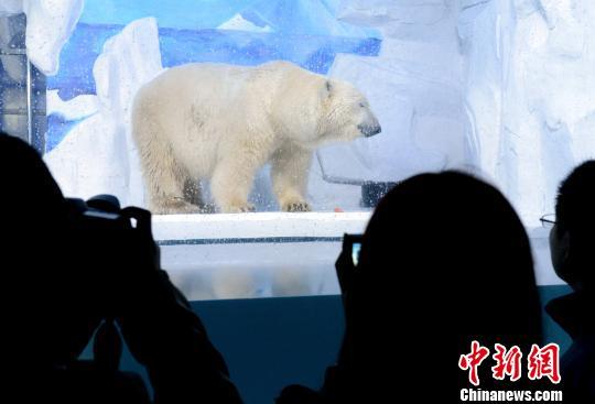 大型极地动物北极熊落户福州(图)小乌龟学美语自制书图片
