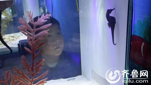 天下第一泉风景区大明湖海底世界山东首届人工繁殖海马展(齐鲁网 张理 摄)