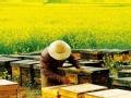 《舌尖2》片花:养蜂人