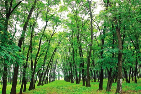 林��i����9�b9i#�f�:#m_青龙湾固沙林自然保护区(图)