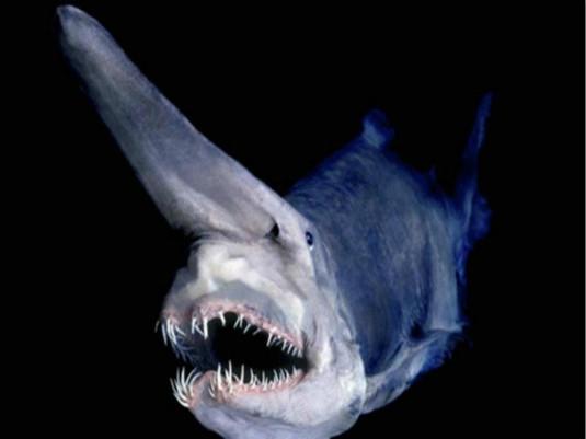 奇怪的海洋生物_海洋生物简笔画
