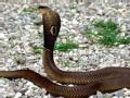 另类主角点赞录 蛇王的秘密