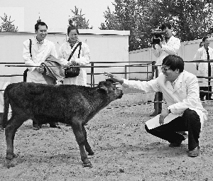 李光鹏和他的克隆牛。