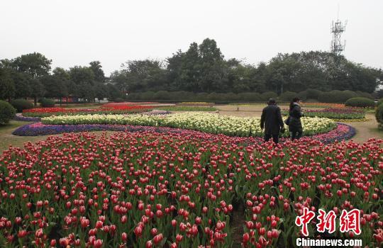 图为重庆大足龙水湖景区内,鲜花制作成的动物形象吸引市民拍照留念.