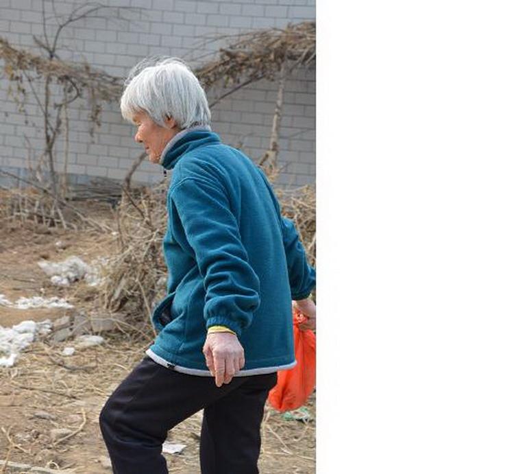 石家庄69岁老太打工挣钱喂养流浪猫狗[组图]