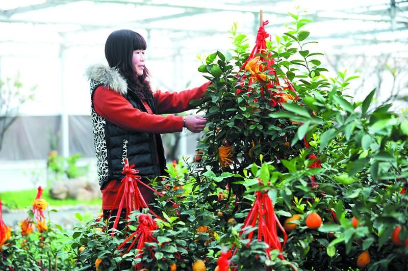 青岛枯桃花卉生态园_【良心收集】青岛最全五一景点优惠活动大全