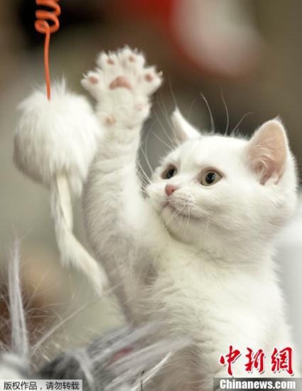 尼一只猫为躲狗爬树上 大雨中困4天