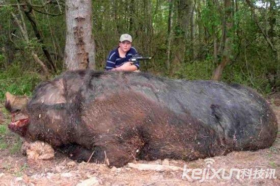 贾米森和他打死的巨型野猪.