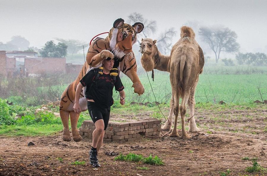 英国男子穿老虎装跑马拉松呼吁保护动物(高清组图)