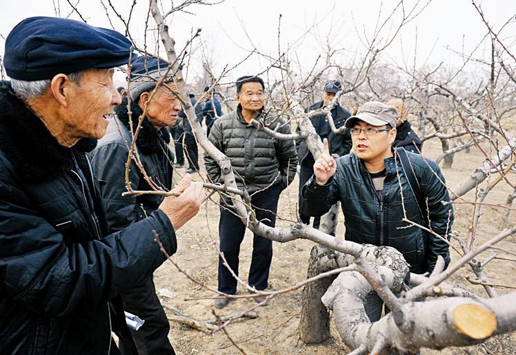 桃树的管理技术