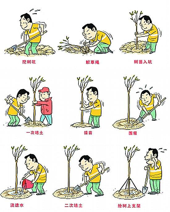 植树马克笔手绘