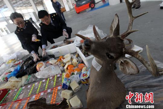 上海检验检疫部门对截获禁止携带入境物品以及不合格的进口水生动物、水产品开展集中销毁。 李萌 摄