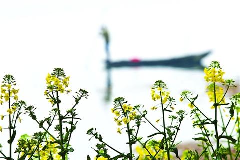 高唱着欢快的乐曲;春天来了,小朋友们手拉手穿过花海树林,感受生命的