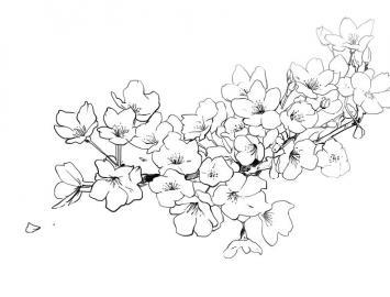 日本樱花怎么画简笔画