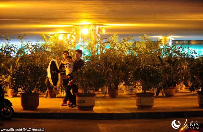 图为龟背立交下层光线昏暗,几乎见不到阳光,不知道这些植物能存活多久。