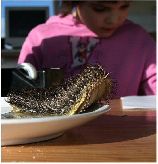全球最恐怖最罕见动物:长相丑陋的三眼恐龙虾(1)_科学探索_光明网