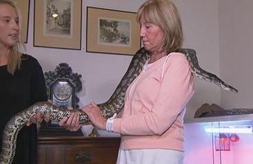 图为莎伦和她饲养的蟒蛇。