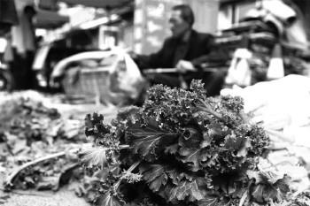 本地苔菜上市1元/斤获青睐(图)-搜狐滚动红豆杉的价格表图片