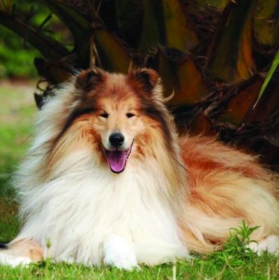 宠物国标 将犬分7类,你的属哪类