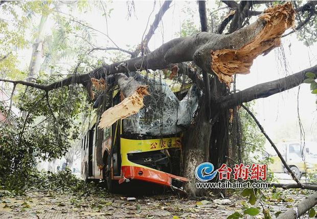 公交司机错将油门当刹车撞断路灯大树致12人伤