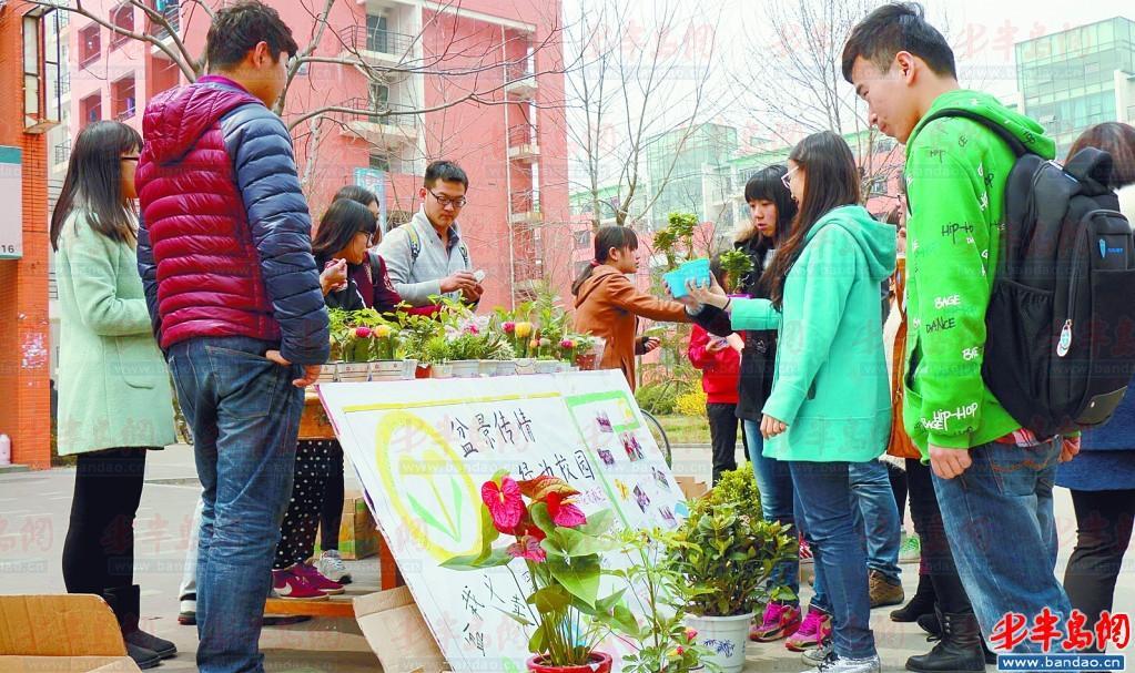 现场 爱心 盆栽/义卖盆栽现场。