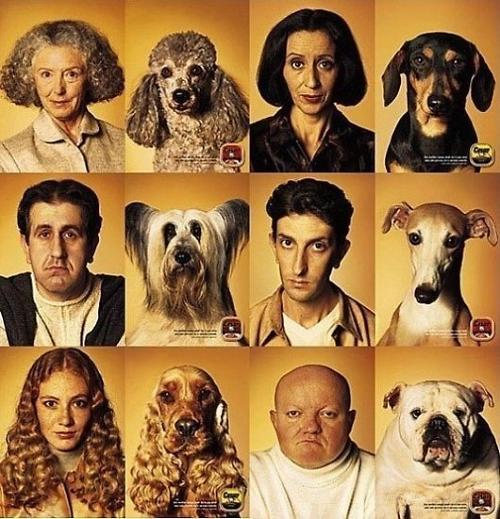 照片中6对主人与狗狗的照片,他们无论脸型,表情,发型,气质都极其相似.图片