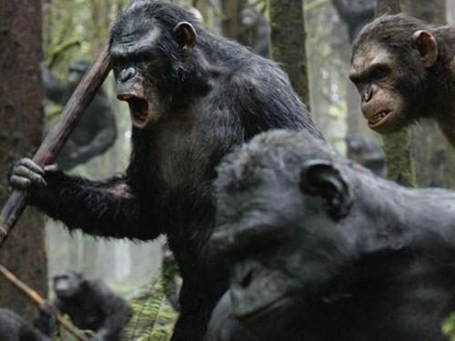 猩猩恺撒率领的猩猩部队持枪弄棒地闹起了革命【点击查看高清组图】