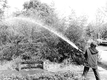 干枯的竹林终于喝上水了。本报记者 孟杰 摄