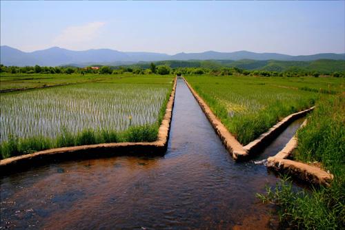 镜泊湖响水大米种植地。