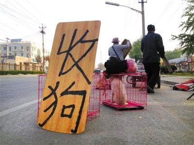 北京一家狗市外,很多人在路边收狗卖狗。当地商贩说,有人专收患病的狗,通过网络渠道售卖,这样出手快,也不易查出狗有问题。 A12-A13版摄影/新京报记者 尹亚飞