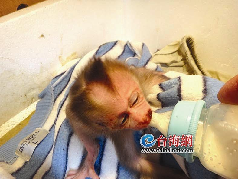 海沧野生动物园一母猴患产后抑郁
