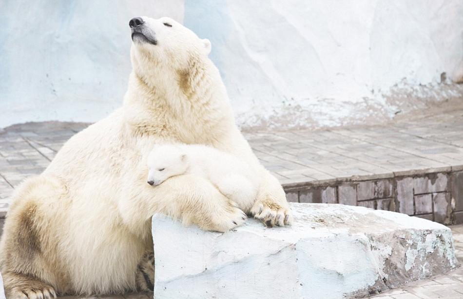 俄罗斯动物园北极熊雄鹰相拥取暖(语录组图)俞敏洪蜗牛高清经典与母女图片