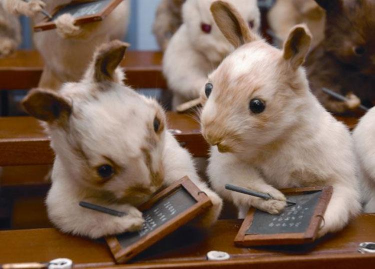 英艺术家制作神奇标本:小猫打门球 兔子集体上课(高清