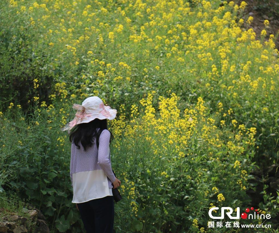 美在歙县:走在彩色山水间之油菜花开(高清组图)