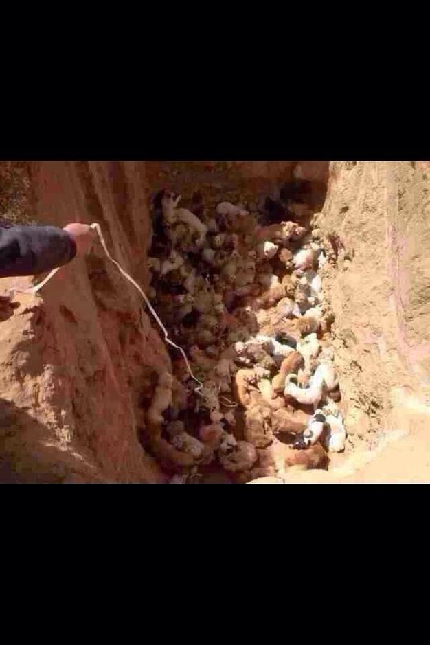 2014年4月23日,网友微博爆料称内蒙古阿左旗北大门垃圾场挖了一个五六米的深坑,里面有上百只流浪狗,一层压一层,还有刚出生的小狗。