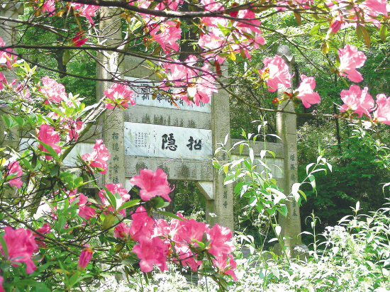 2014年麻城杜鹃花节_杜鹃花开满山红(图)-搜狐滚动