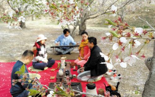 赏花、听琴、品茗……在浮躁的现代生活中,这种神仙生活让人无限神往。前几日,在大连龙王塘樱花园,几位爱茶的都市,树下摆上了茶席,享受了一把大自然中的茶香。