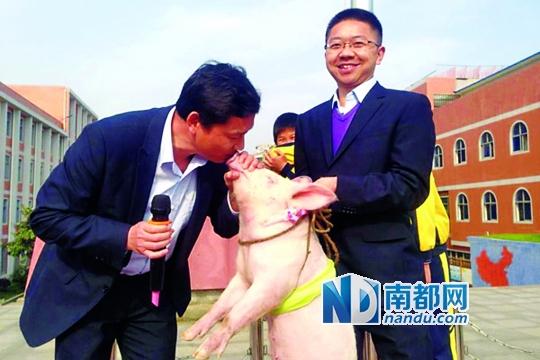 洪耀明亲吻小猪。 网络图片