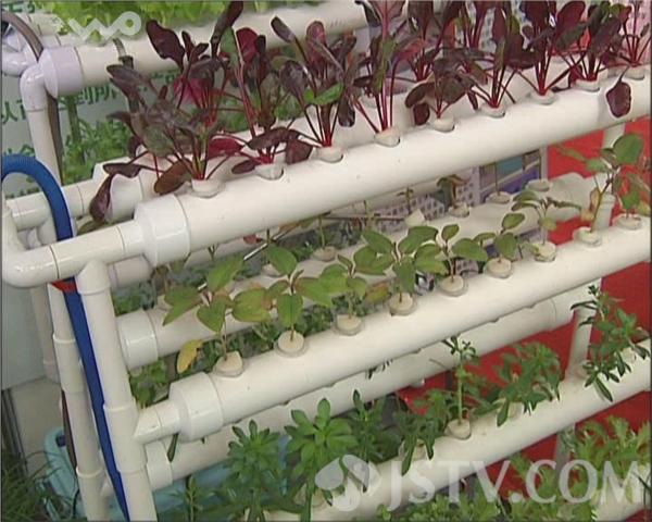 蔬菜产业博览会 小型菜园受追捧