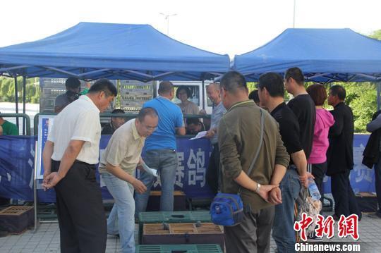 19日,新疆龙翔赛鸽俱乐部举办了新线路200公里的比赛。图为18日晚鸽手报名将赛鸽交给俱乐部。朱景朝摄
