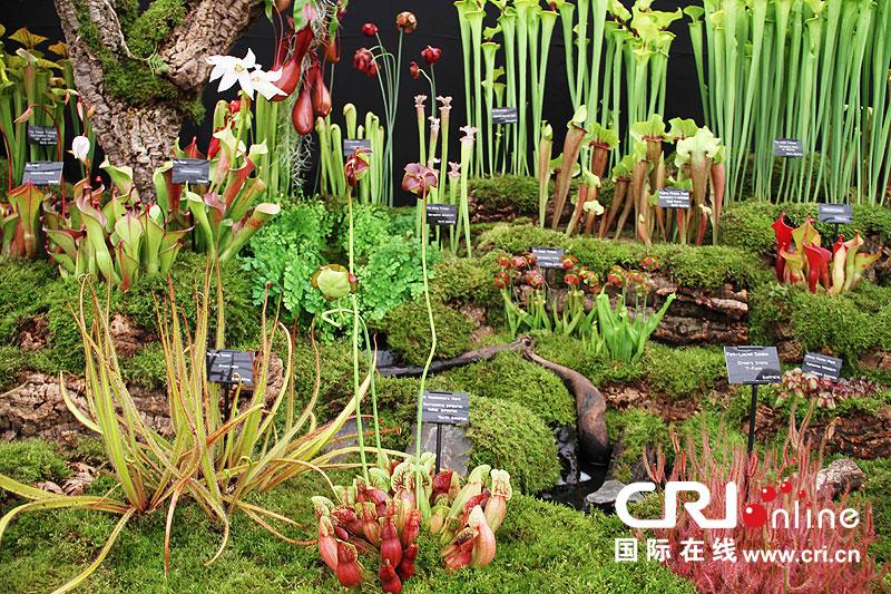 色彩缤纷,种类繁多的花卉以及创意无穷的园艺设计吸引了包括王室,名人图片