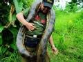 发现·亚马逊——丛林岛王