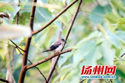 宝应湖42种鱼儿游68类鸟儿飞 成迁徙鸟类重要栖息地