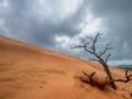 骄傲的沙漠